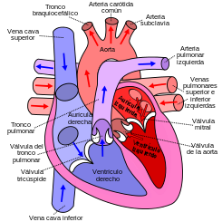 funcion normal del corazon.png